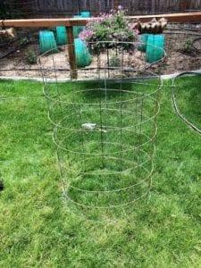 DIY Tomato Cage that lasts
